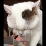 ただ、水を飲んでいるだけなのに。